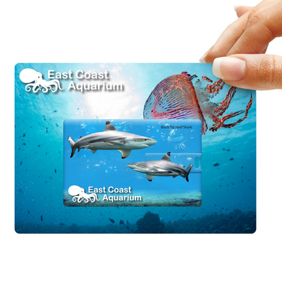 Picture of Credit Card Flash Drive on Custom BackingCard